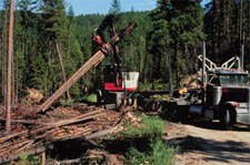 photo of logging
